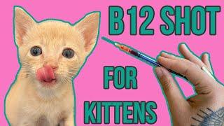 B12 Shot for Ferguson the Kitten