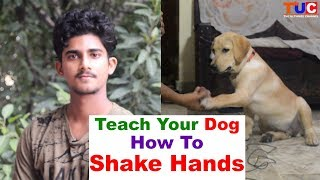 """Teach Your DOG How to """"SHAKE HANDS"""" : Dog Training : TUC"""
