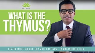 What is the Thymus and What Does it Do? | Infusio