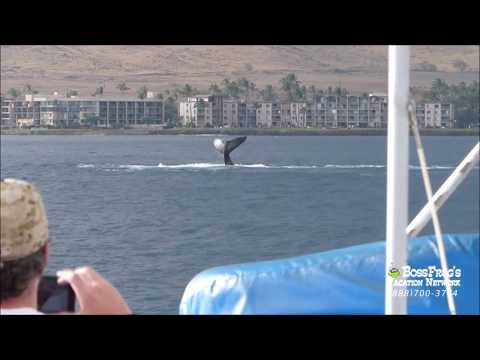 Whale Watching on the Malolo with Boss Frog's