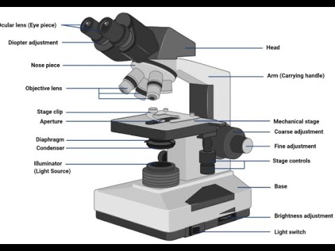 Ce este viziunea modelată la orbi