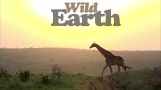 WildEarth - Sunset - 13 October 2020