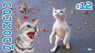КОШКИ 2019 Смешные коты приколы с котами до слез – Смешные кошки - приколы с животными