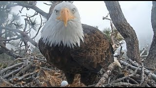 Big Bear Eagles ~ PROUD PAPA! Shadow Sees Egg FIRST TIME!! 💖 Beautiful Flybys SLOMO! 1.9.20