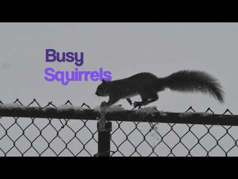 Hat Tricks' Squirrels