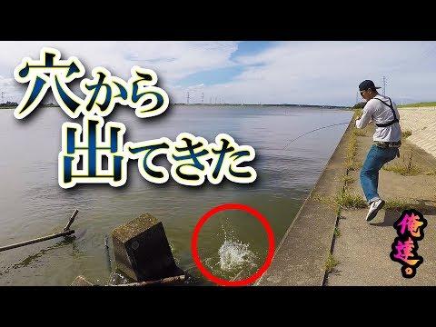 めっちゃ釣れる技と秘密の釣り方を戦わせてみた【霞ヶ浦水系】