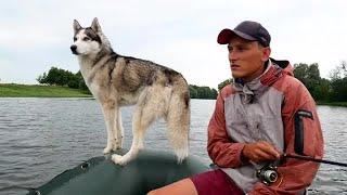 Fisherman And Husky Dog Stock Video