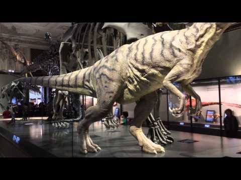 Vienna - The Natural History Museum