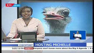 Meet Michelle, the ostrich that lives with humans, likes ugali and poses for selfies