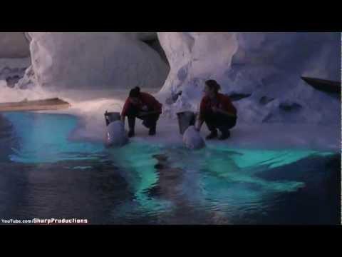 Wild Arctic®