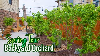 Backyard Orchard / Spring Tour / Over 30 Fruit Trees! / High Density