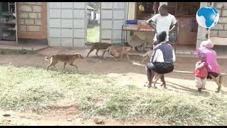 Residents of  Block 10 estate in Eldoret angry after dogs allegedly