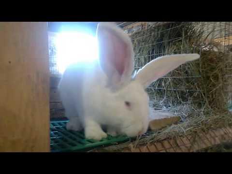 Кормление,решаем жилищную проблему у крольчат,сбор яблок с помощниками.