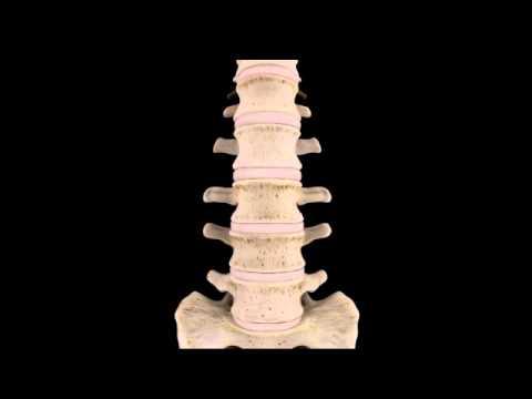 Stirando i muscoli della colonna vertebrale toracica
