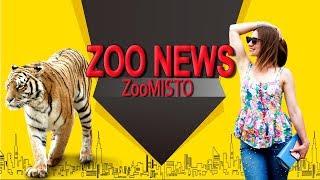 Мультфильм с супер героями-животными и замороженный обед  | Новости из мира животных #23 | ZooMisto