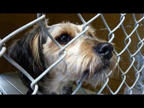 Γερμανία:«Όχι» στις υιοθεσίες σκύλων τα Χριστούγεννα