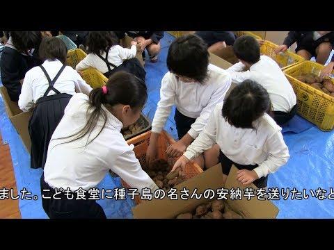 種子島の学校活動:安納小学校安納芋発送箱詰め作業絵描き