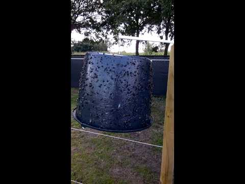 Sticky Trap Black bucket Trap with Horseflies