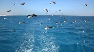Чайки, Море, Небо