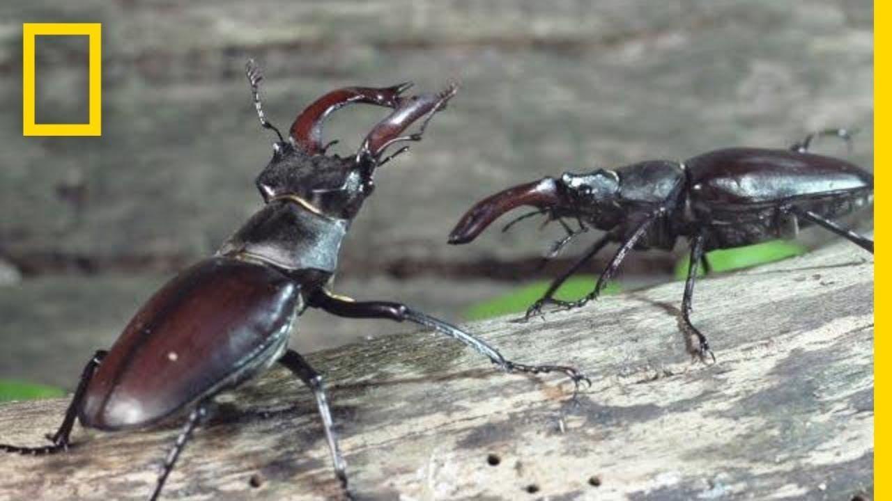 Peek Inside the Strange, Secret World of Bugs | Short Film Showcase thumbnail