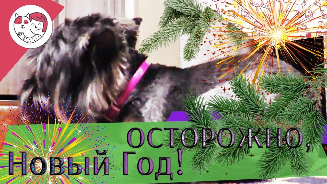 Опасности для питомцев в новогодние каникулы. ilike.pet