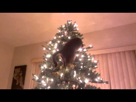 Our cat, Sesshomaru, found out the hard way that Christmas trees aren't for climbing.