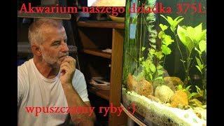 43#Akwarystyka Rodzinna - Akwarium naszego dziadka 375L (wpuszczamy ryby :)