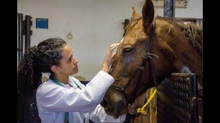PL 7036/2017 - Regulamentação da profissão de médico-veterinário - 12/07/2021 10:30