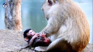 Ohgod!What mother Queen try to do on her newborn .World Monkey.