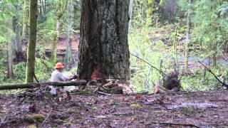 Logging in Washington State - April 2014