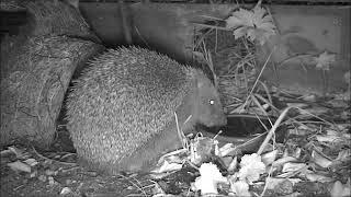 Wildlife Trail Camera - 3.7.2019