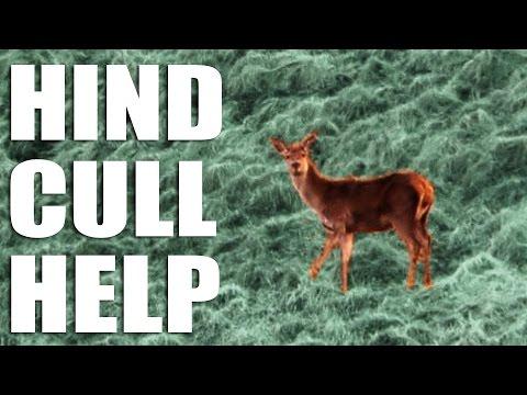 Hind Cull Help