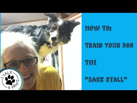 How to Train Your Dog the Trick: