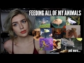 Download Youtube: FEEDING ALL OF MY ANIMALS (Yes, I Do This Every Day)