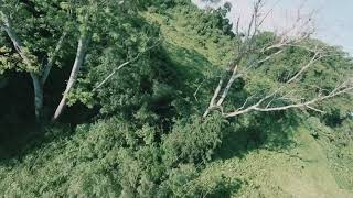 DJI FPV into the forest