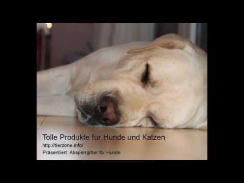 Absperrgitter für Hunde