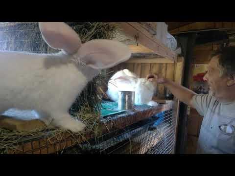Кормим кроликов,танцуют все.