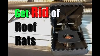 How I got rid of Roof Rats