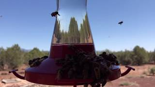 Bees on my hummingbird feeder
