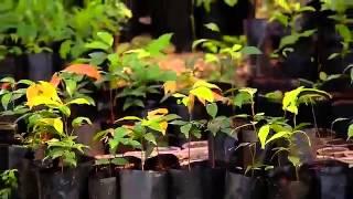 Especiales Noticias - Hacia la sustentabilidad agrícola y forestal
