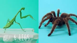 Insect Vs. Spider