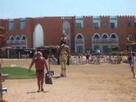 Video kamelenrit Sunrise Select Garden Beach***** (Hurghada, Egypte)