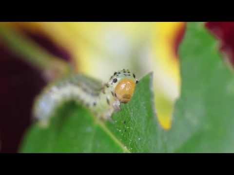 Danno di funghi di parassiti