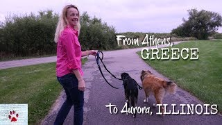 How I adopted 2 stray dogs from Greece