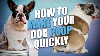 How to Make a Dog Poop Quickly - 5 Actionable Tips
