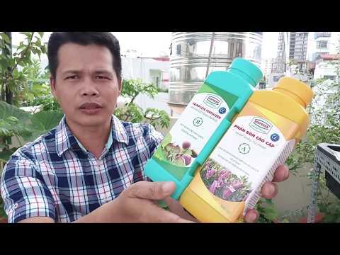 7kg | Bán cây sung mỹ hcm - 0938665529 - cây giống sung mỹ
