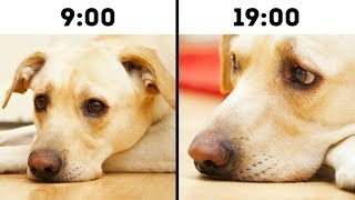 10 Mistakes That Shorten Your Pets Life