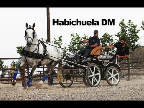 Habichuela DM Enganchada - Mayo 2018