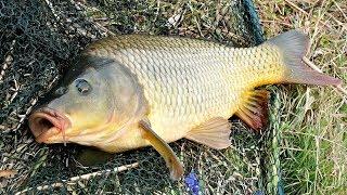 Лиман рыбалка ростовская область форум земляков