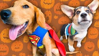 Love Dog In Cute Costumes? Rescue Dog Dresses Up To Find A Home